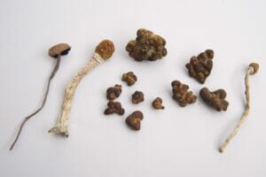 Wat is het verschil tussen paddo's en truffels?