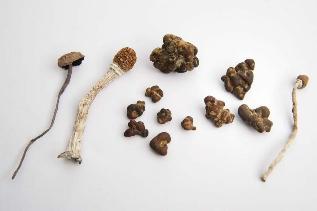 paddo's en truffels